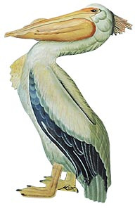 Pelican - Painted metal wall hanging