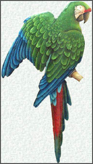 Hand painted metal parrot wall hangings. Military Macaw