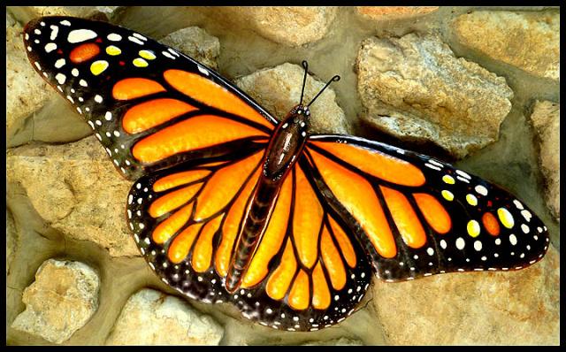 Monarch Butterfly Garden Art Outdoor Metal Art Painted Metal Butterfly Wall Hanging 16 X 34