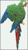 "Tropical Bird Metal Wall Art - Painted Metal Green Military Macaw Parrot - 10"" x 24"""