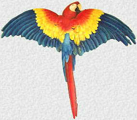 painted metal scarlet macaw parrot