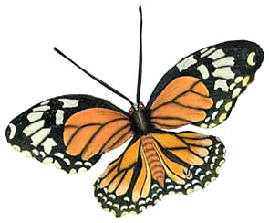 Hand Painted Monarch Butterfly Wall Art - Steel Drum Art 7